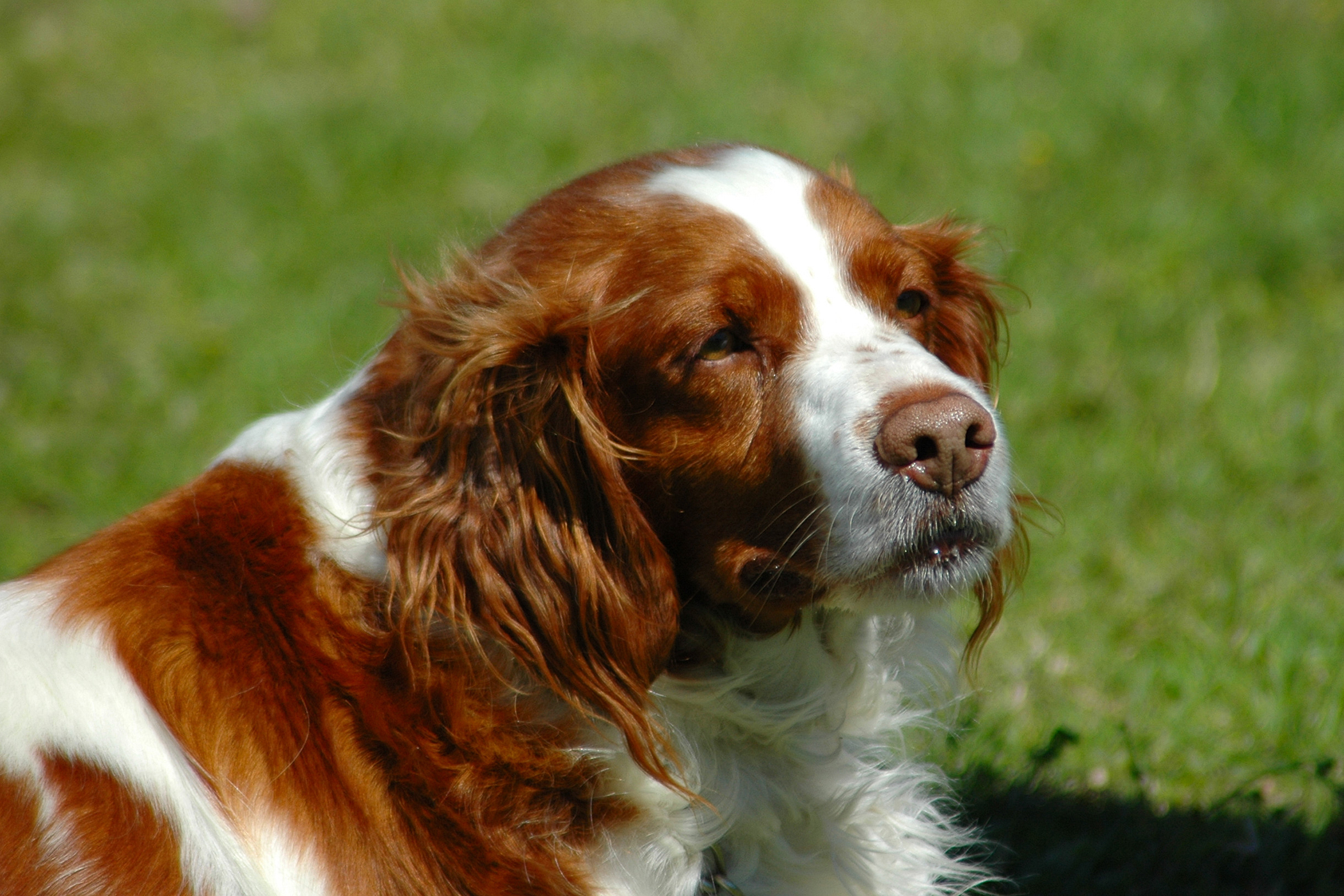Tracheotomy in Dogs