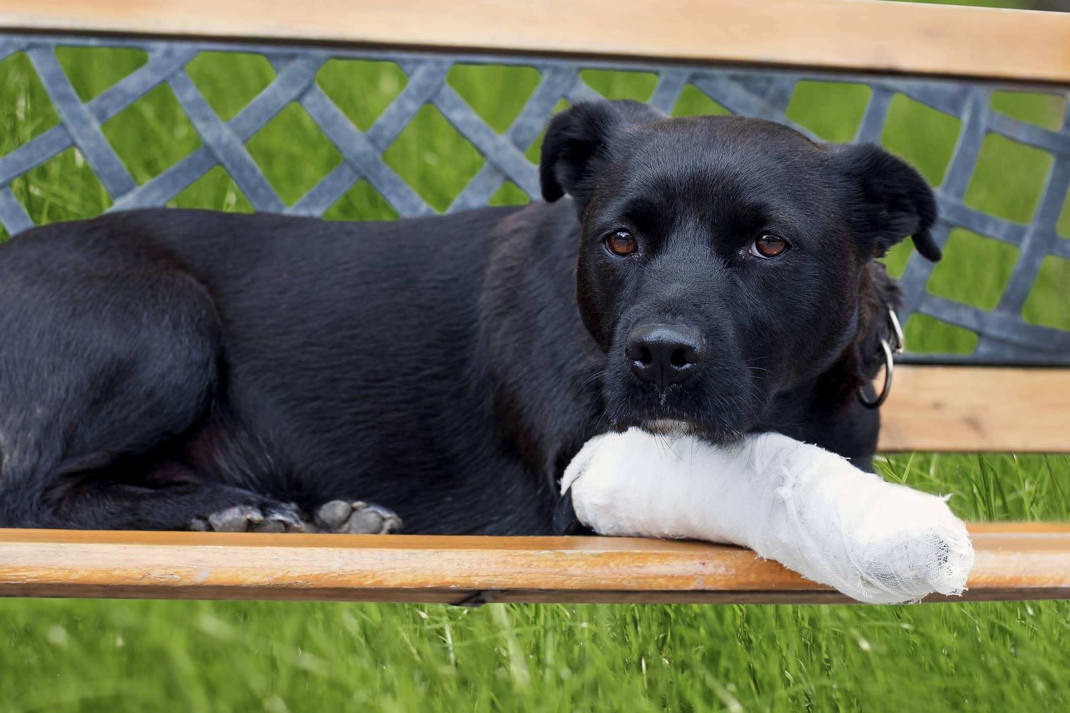 Trochlear Sulcoplasty in Dogs