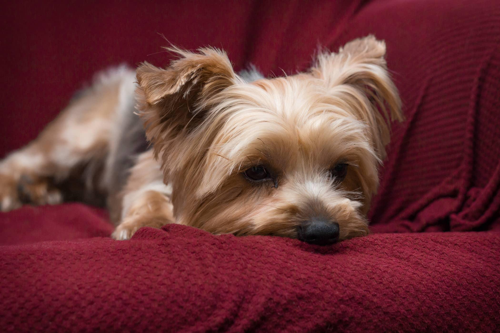 Vaginoscopy in Dogs