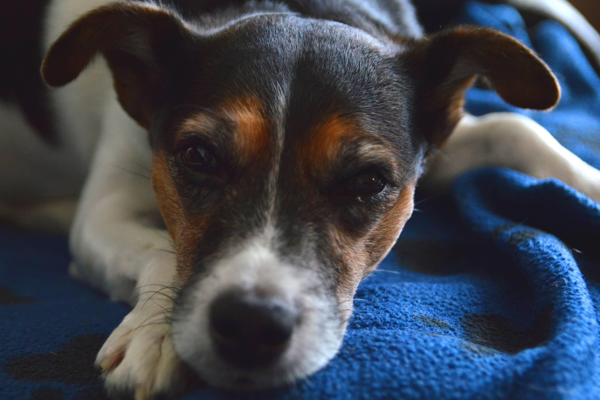 Vertebral Body Plate in Dogs