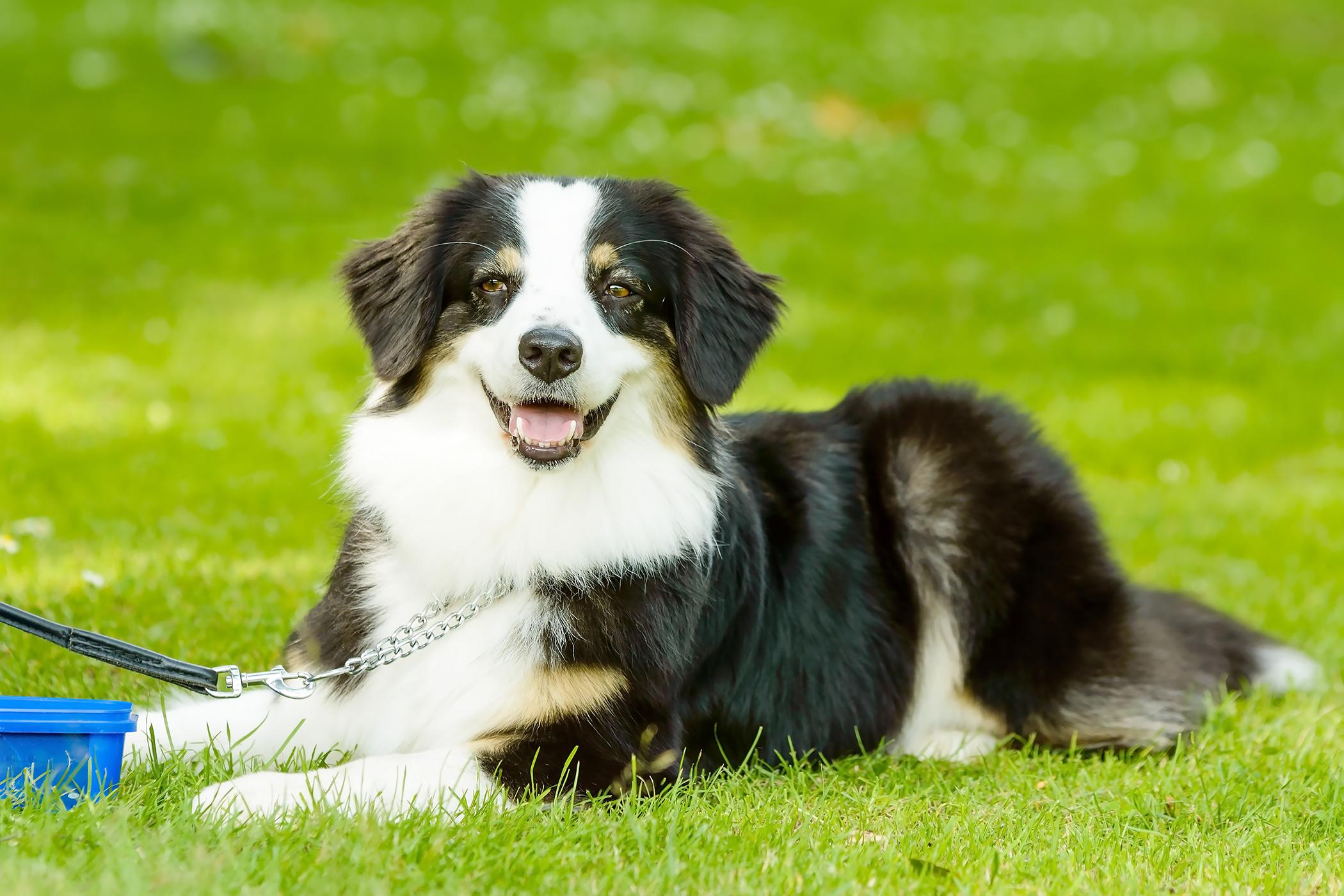 How To Get Dog Bile Out Of Carpet Uk - Carpet Vidalondon
