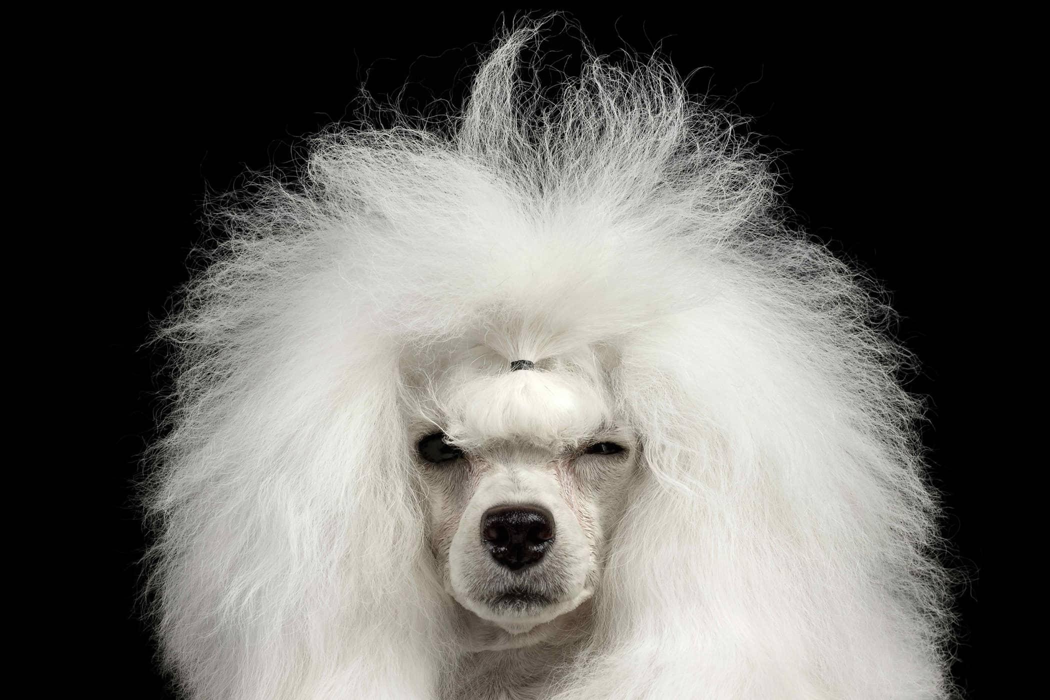 ¿Por qué mi perro Mantener Un ojo cerrado-5308