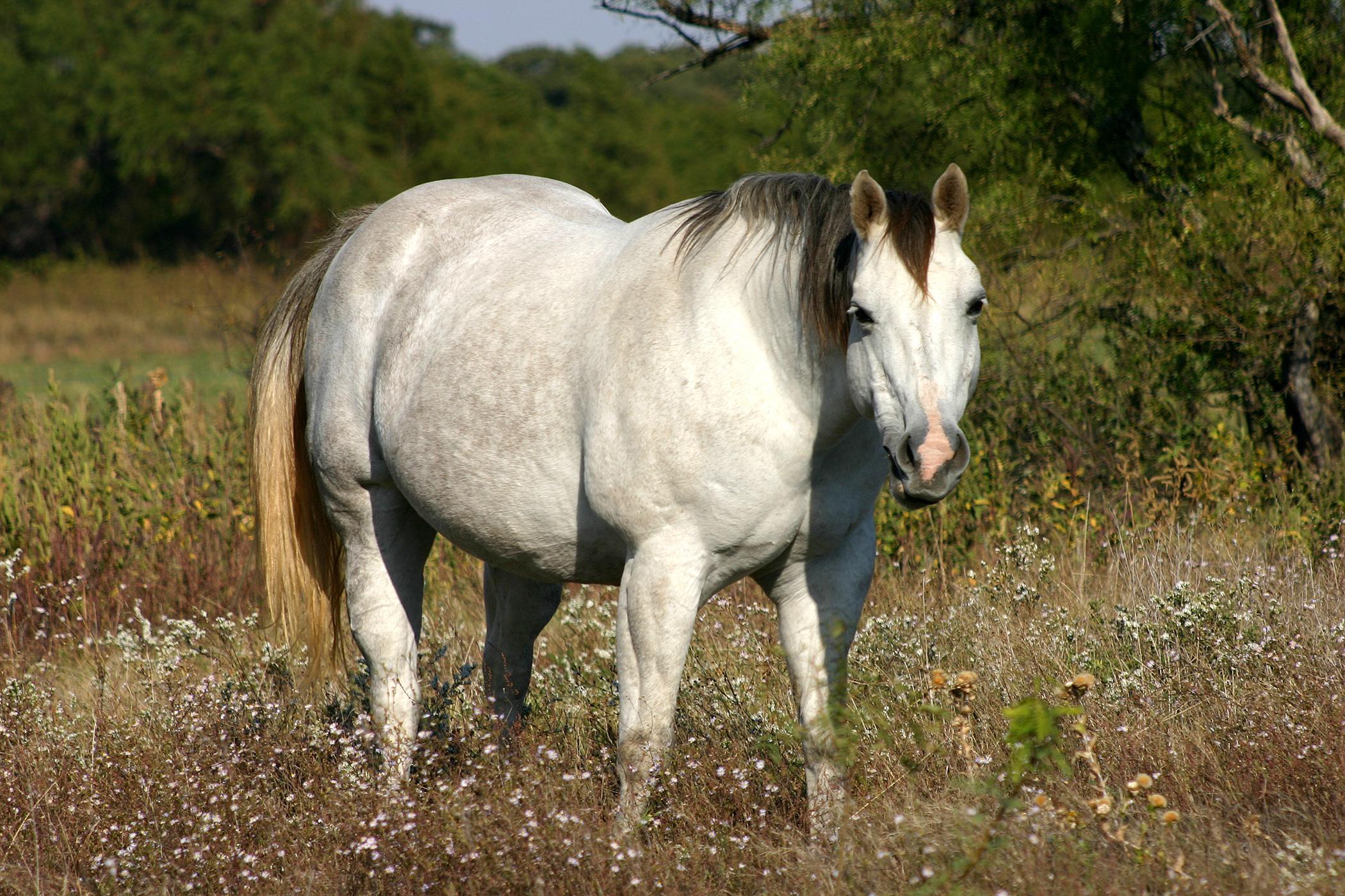 Equine Flu: Flu Vaccine Allergy In Horses