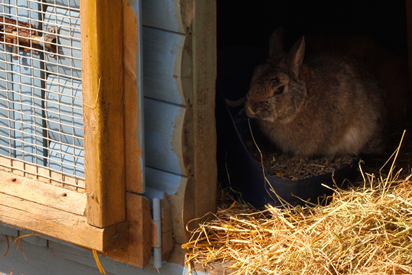 how to clean rabbit urine