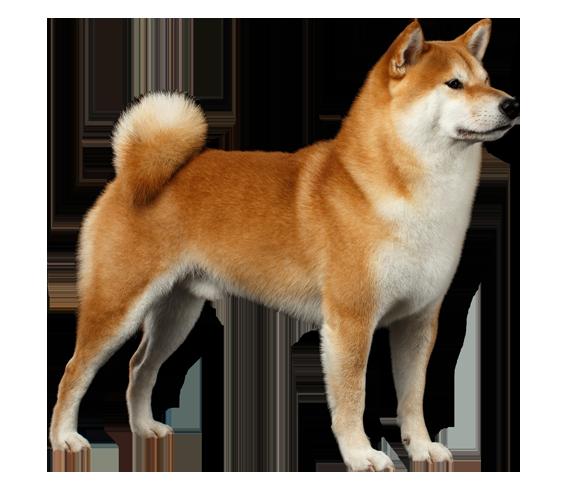 Louisville canine population
