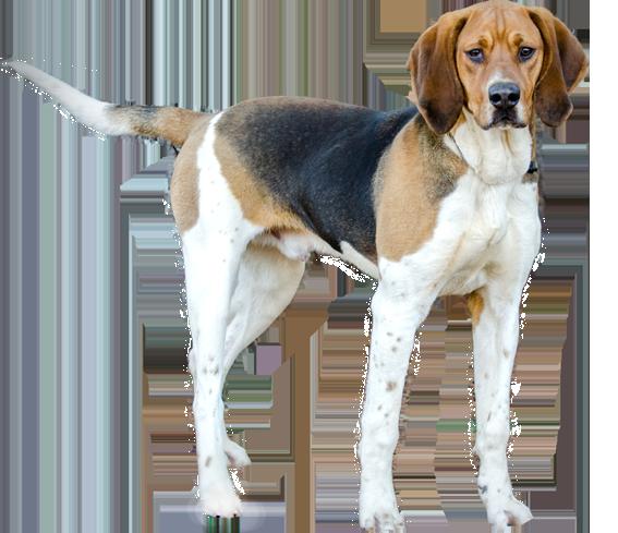How To Make Hound Dog Ears