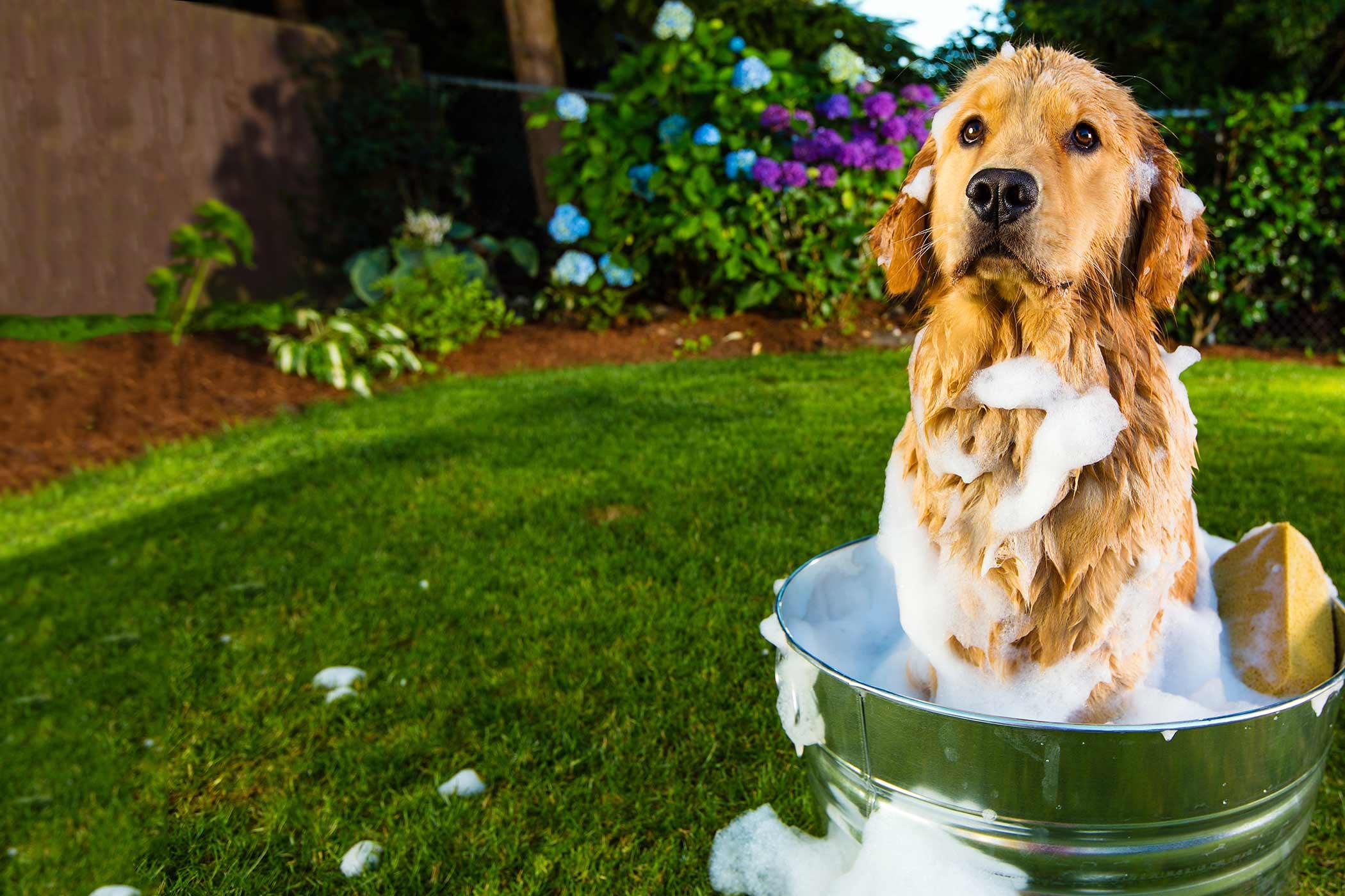 How To Bathe A Dog Outside Wag