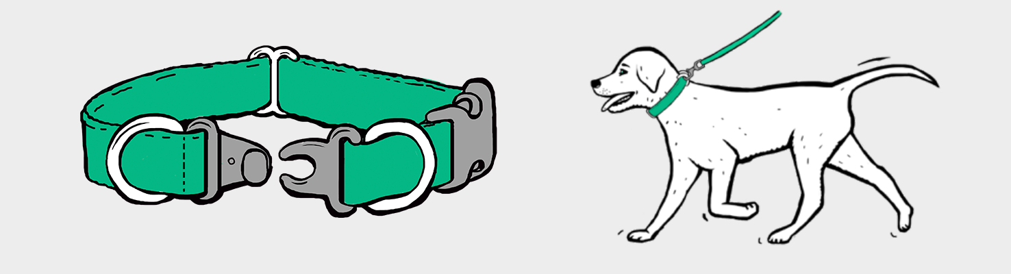 How to Make Sure Your Dog's Collar is on Correctly