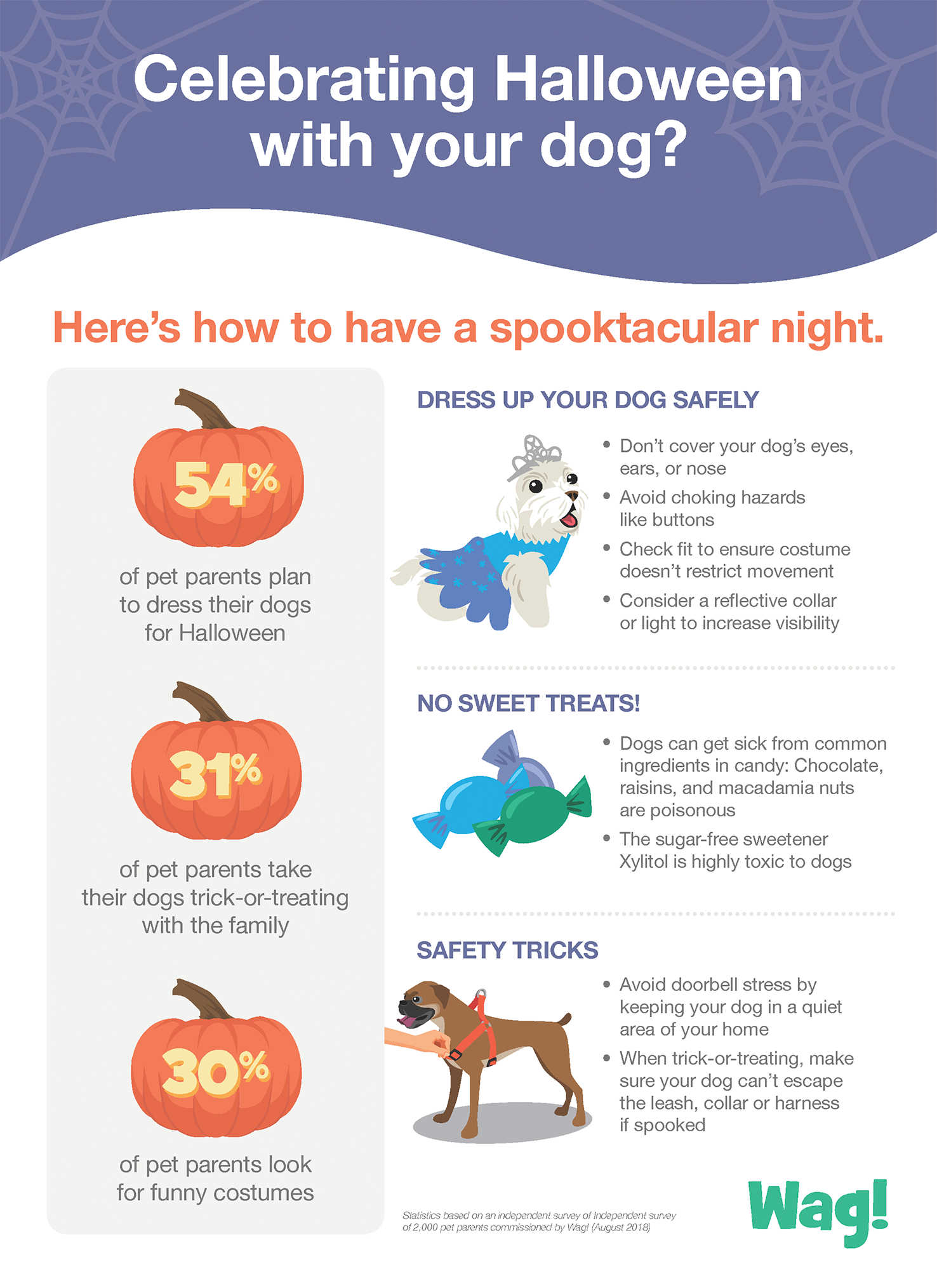 Help Keep Halloween Fun — and Safe — for Your Dog