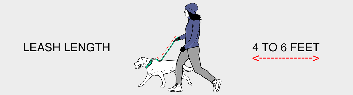 Are Harnesses Good for Dogs?