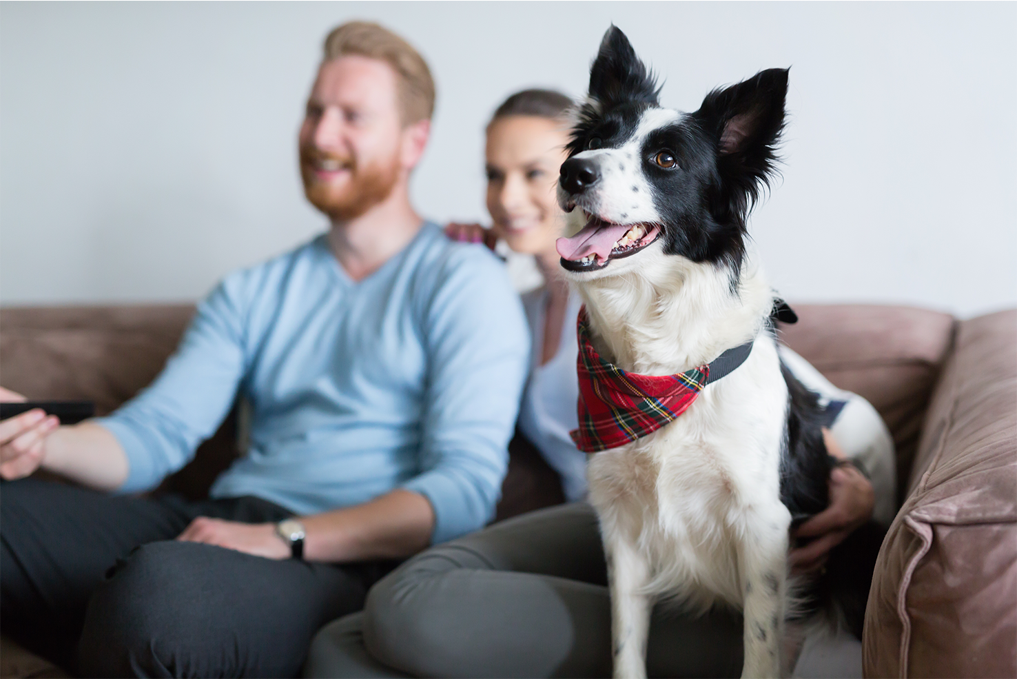 daily-wag-holiday-specials-to-binge-watch-with-your-dog-hero-image