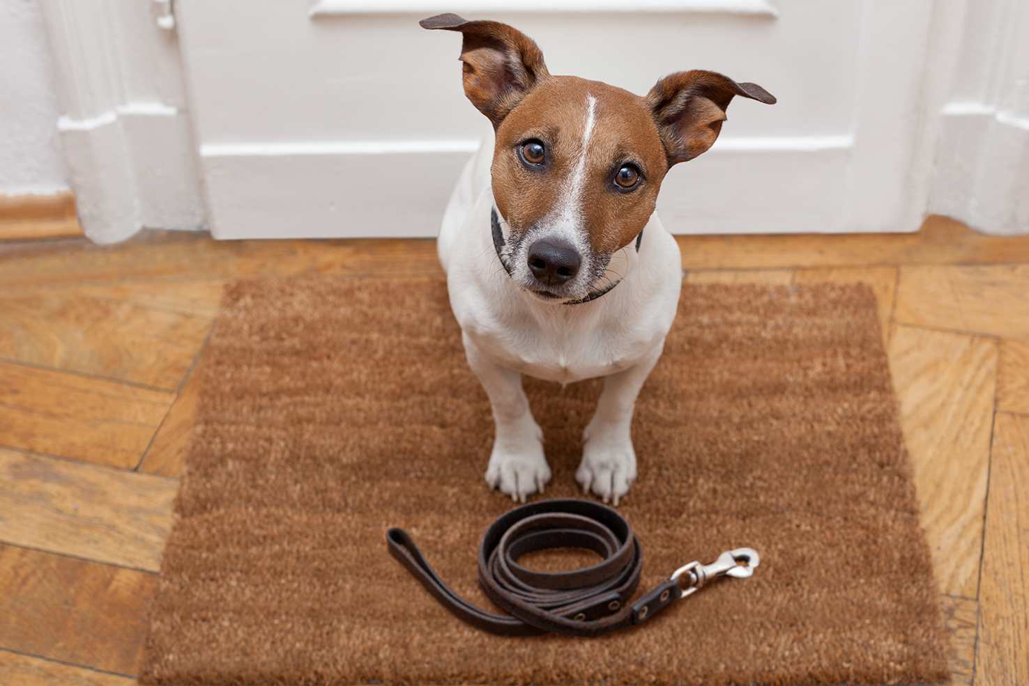 The Best Leash For A Dog Walk