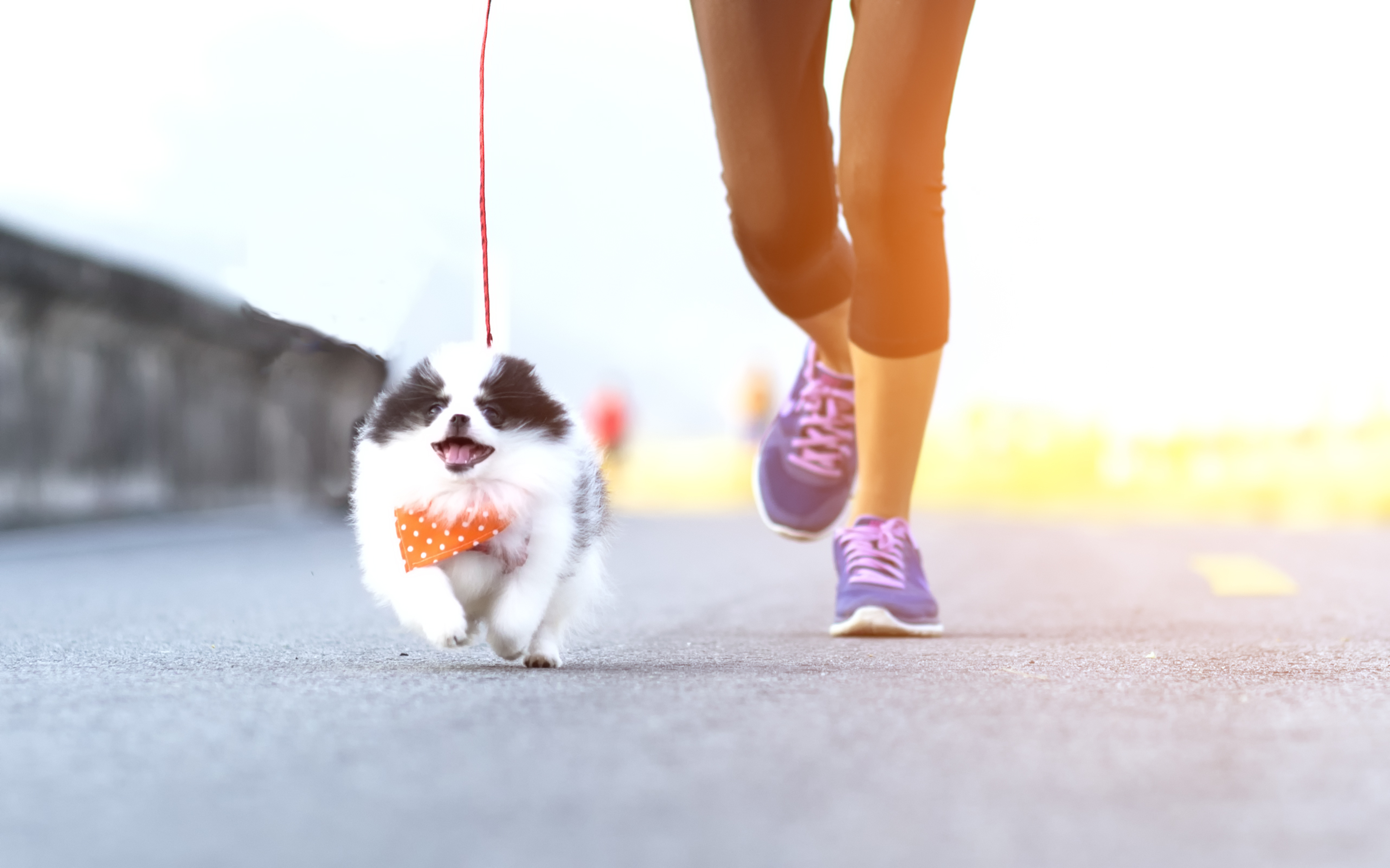 daily-wag-summer-slimdown-how-to-tell-if-your-dog-should-lose-a-few-pounds-hero-image
