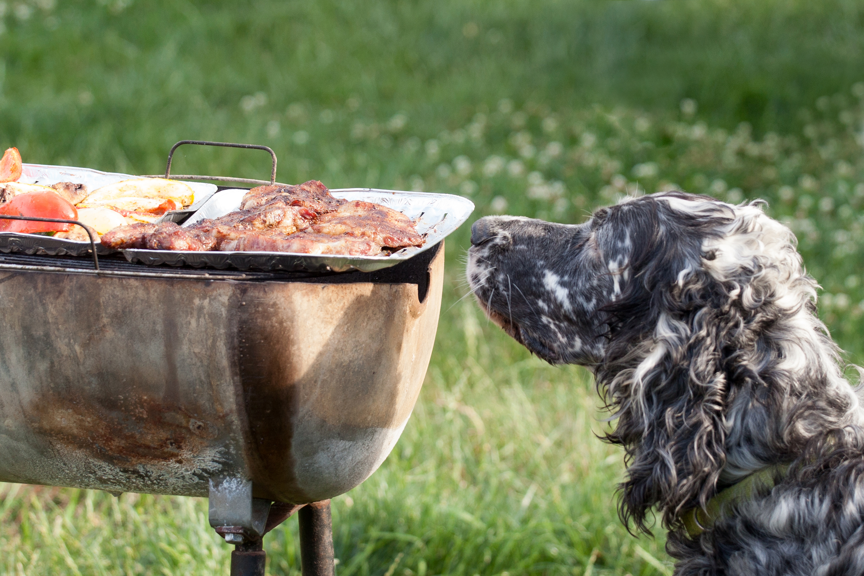 daily-wag-hot-diggity-dog-what-can-my-pups-eat-on-labor-day-hero-image